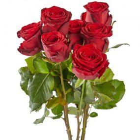 Rode rozen met grote knop