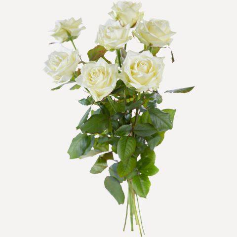 Witte rozen met grote knop