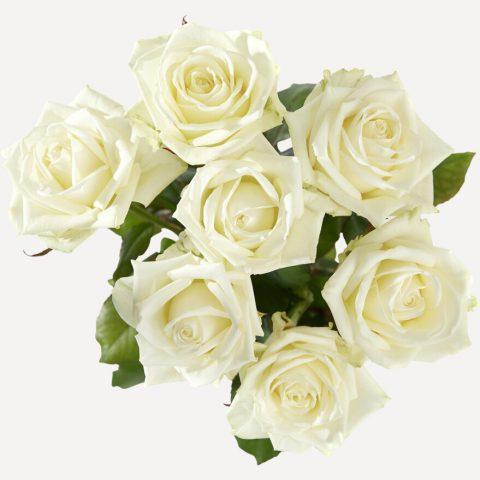 Witte rozen met grote knop boven
