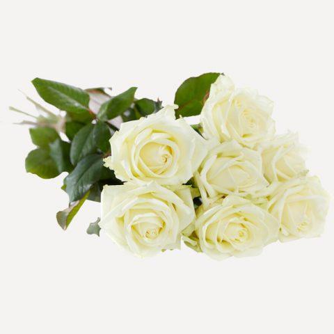 Witte rozen met grote knop liggend