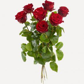 Rode Valentijnsrozen met grote knop